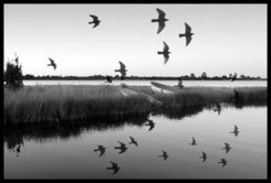 B&W of birds flying over lake
